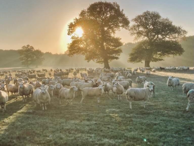 Bakewell Market – Special Entry, Genuine Flock Dispersal